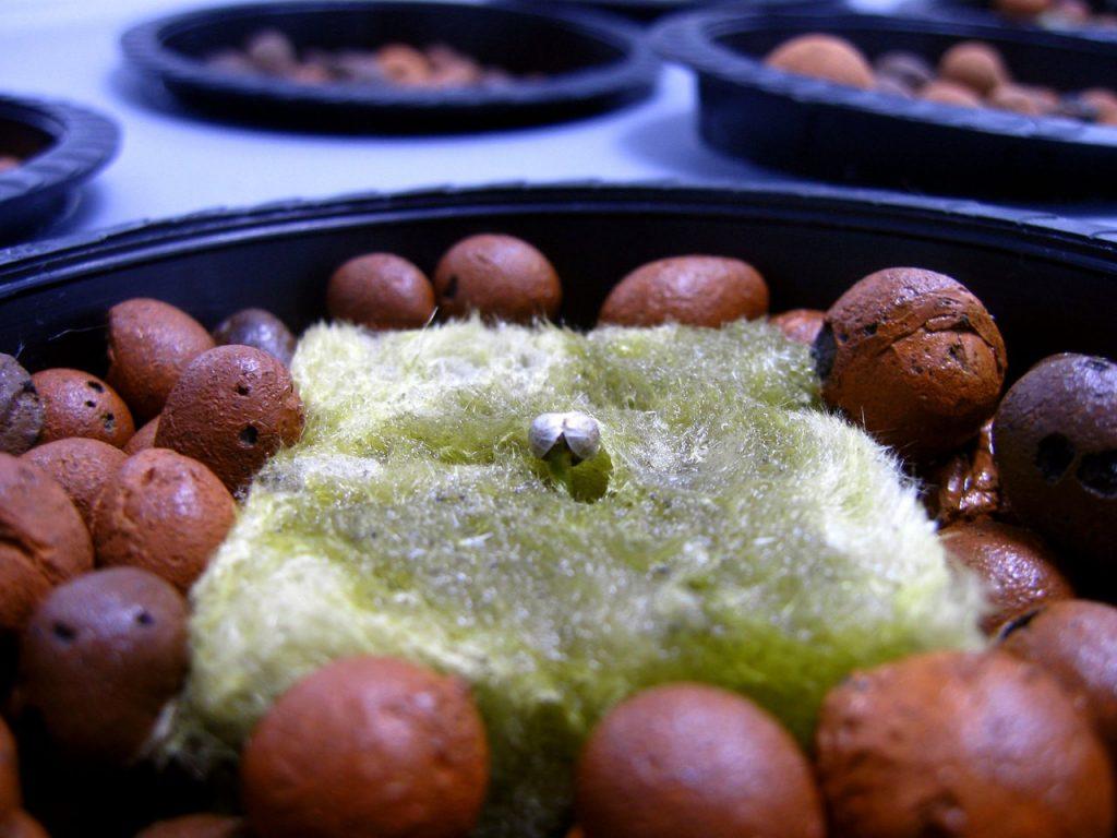 Nasiona konopi jako karma dla zwierząt
