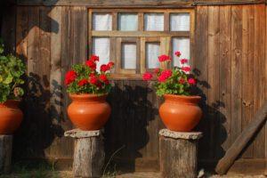 Uroda kwitnących roślin doniczkowych